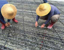 Application 2 of FRP Rebar